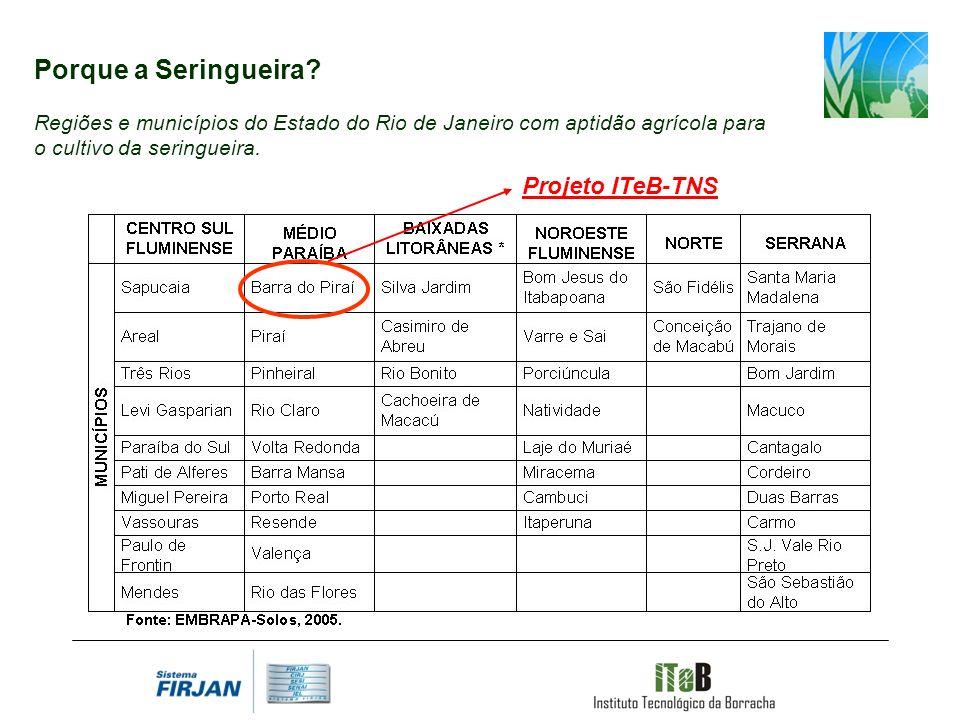 Porque a Seringueira Projeto ITeB-TNS