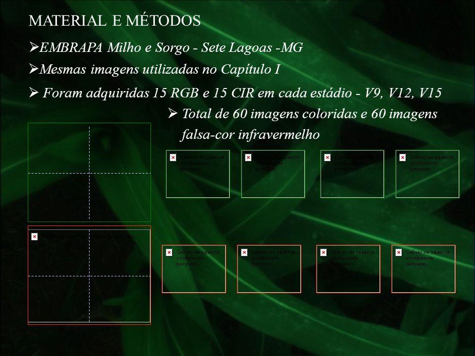 MATERIAL E MÉTODOS EMBRAPA Milho e Sorgo - Sete Lagoas -MG