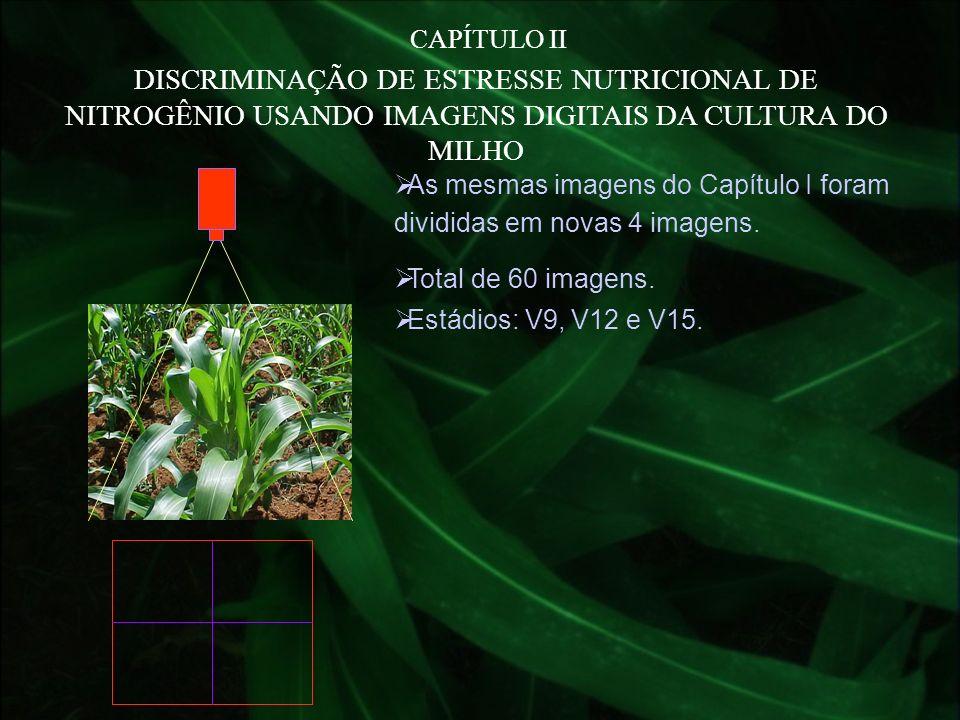 CAPÍTULO IIDISCRIMINAÇÃO DE ESTRESSE NUTRICIONAL DE NITROGÊNIO USANDO IMAGENS DIGITAIS DA CULTURA DO MILHO.