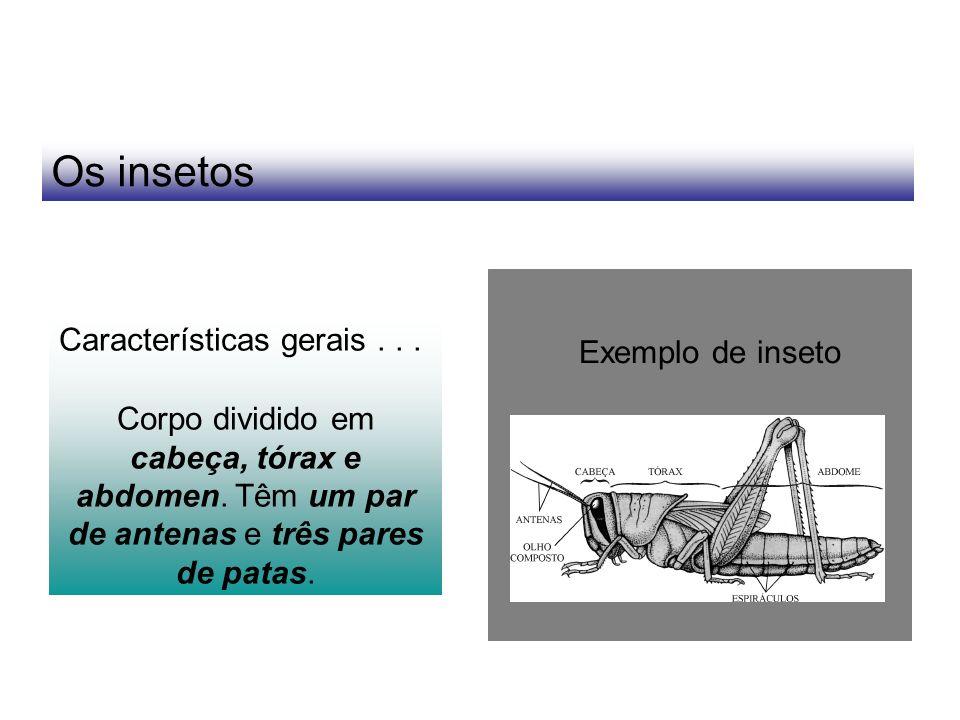 Os insetos Características gerais . . . Exemplo de inseto