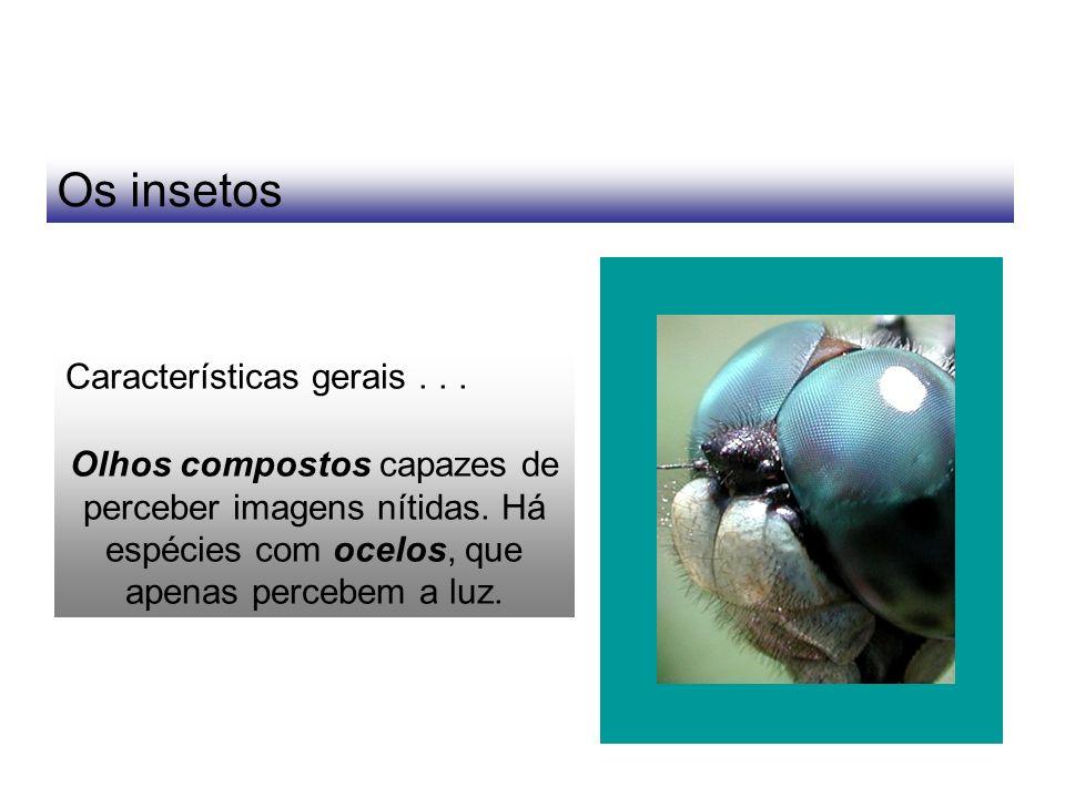 Os insetos Características gerais . . .