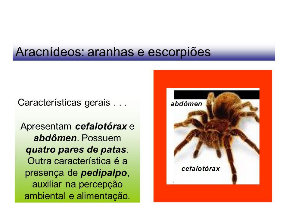 Aracnídeos: aranhas e escorpiões