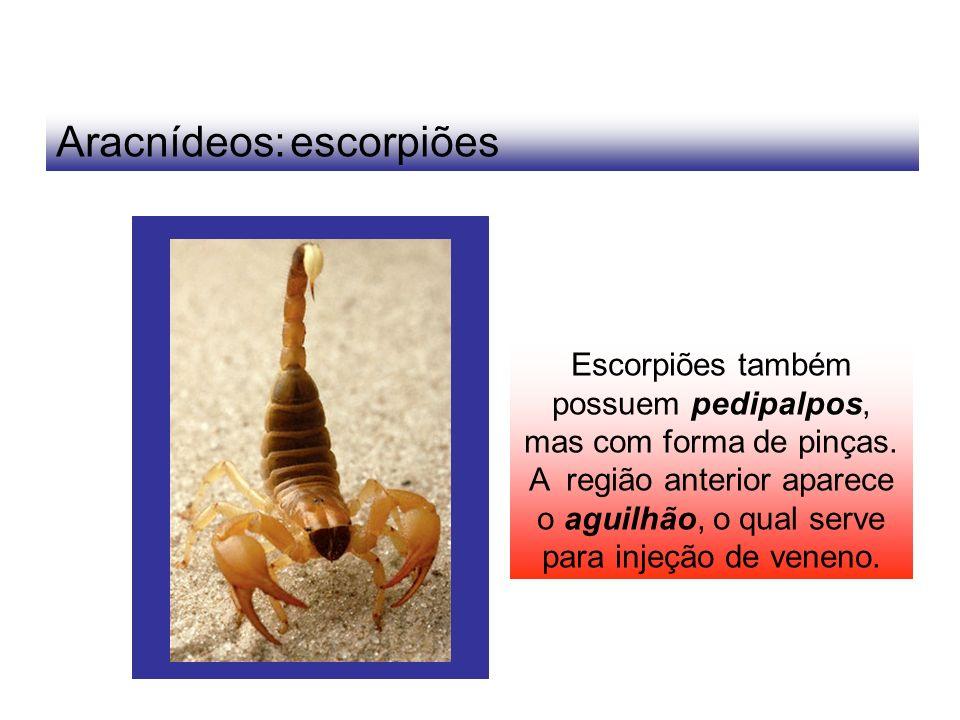 Aracnídeos: escorpiões