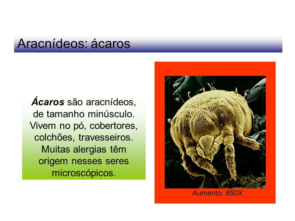 Aracnídeos: ácaros