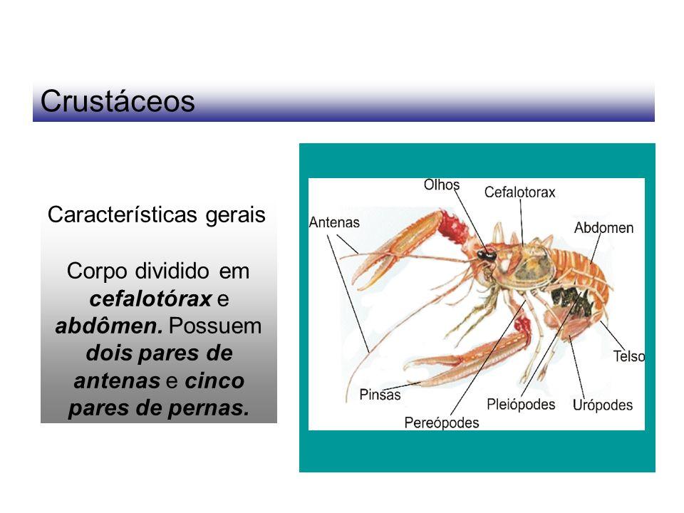 Crustáceos Características gerais