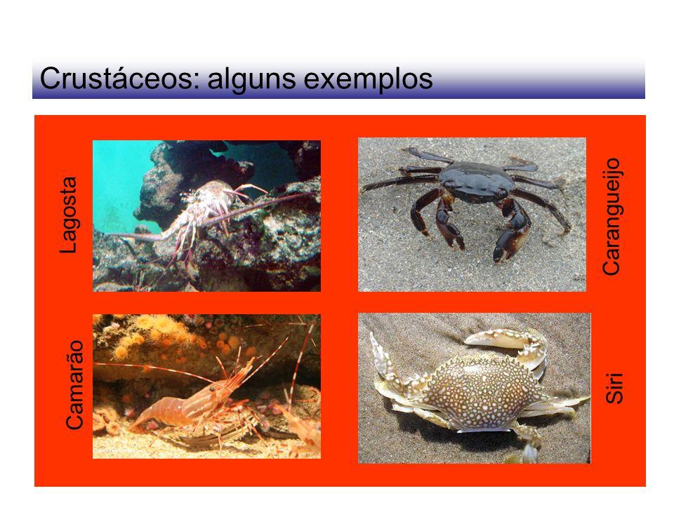 Crustáceos: alguns exemplos