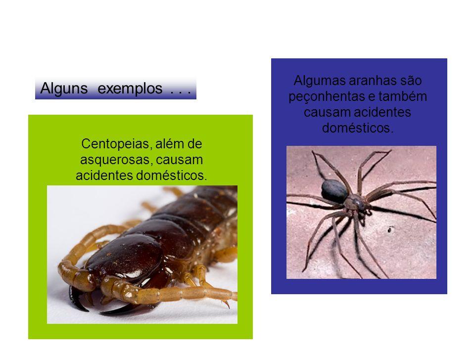 Algumas aranhas são peçonhentas e também causam acidentes domésticos.