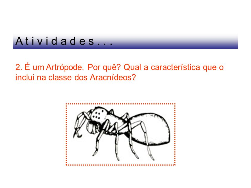 A t i v i d a d e s . 2. É um Artrópode. Por quê.