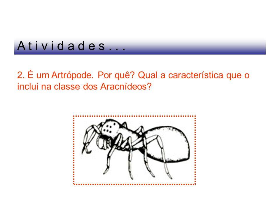 A t i v i d a d e s ..2. É um Artrópode. Por quê.