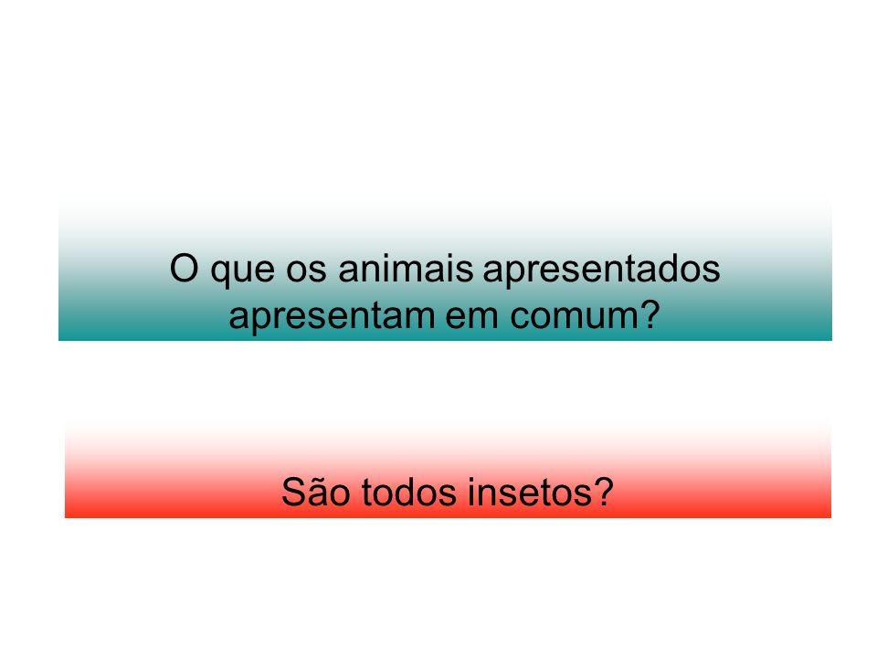 O que os animais apresentados apresentam em comum