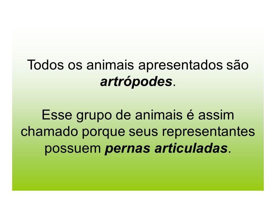 Todos os animais apresentados são artrópodes.
