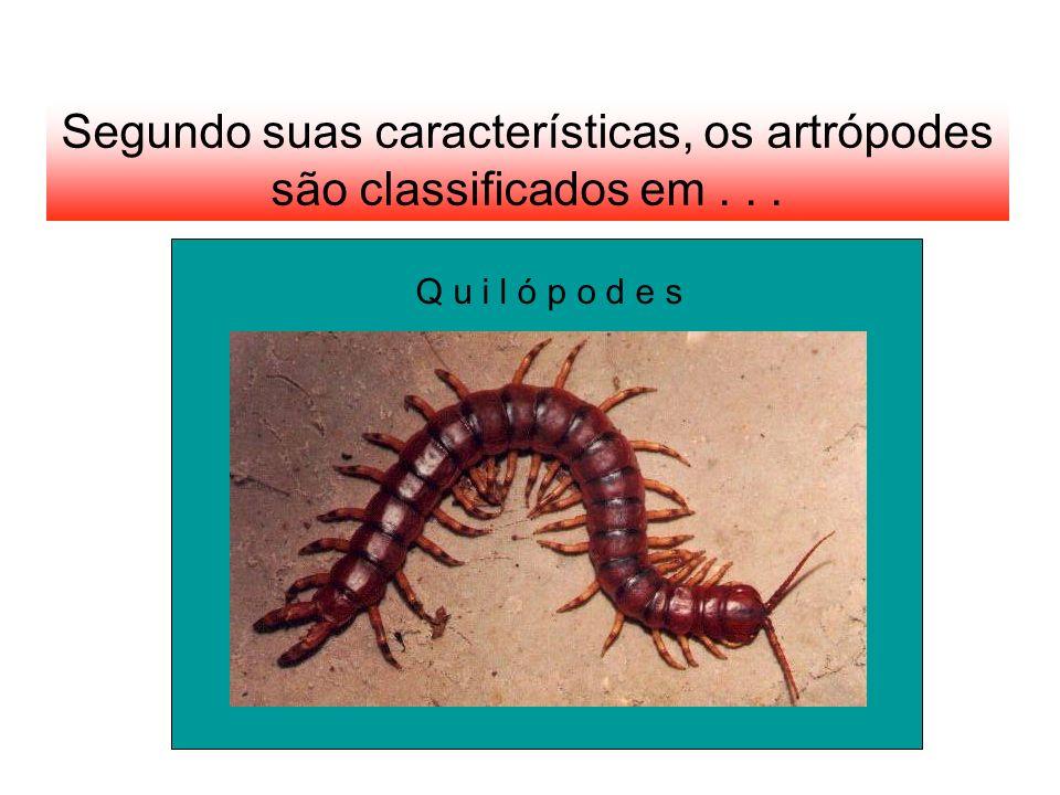 Segundo suas características, os artrópodes são classificados em . . .