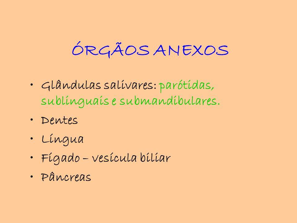 ÓRGÃOS ANEXOSGlândulas salivares: parótidas, sublinguais e submandibulares. Dentes. Língua. Fígado – vesícula biliar.