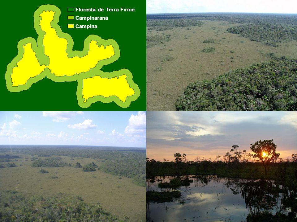 MATERIAL E MÉTODOS Floresta de Terra Firme Campinarana Campina