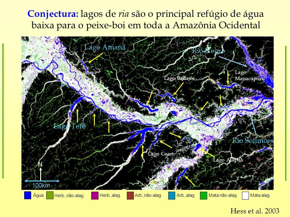 Conjectura: lagos de ria são o principal refúgio de água baixa para o peixe-boi em toda a Amazônia Ocidental