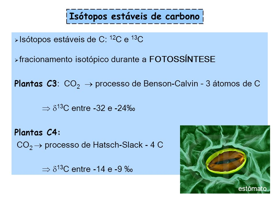 Isótopos estáveis de carbono