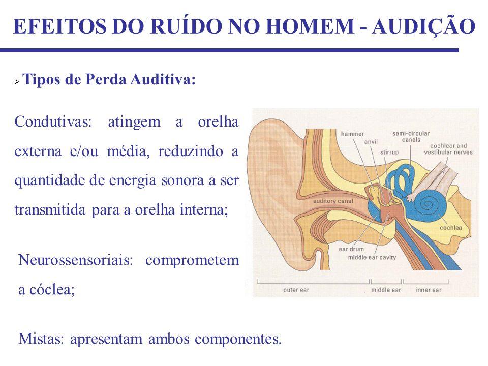 EFEITOS DO RUÍDO NO HOMEM - AUDIÇÃO