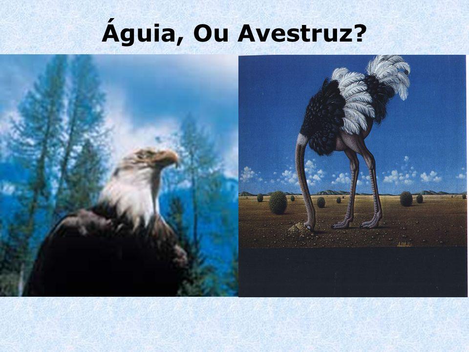 Águia, Ou Avestruz
