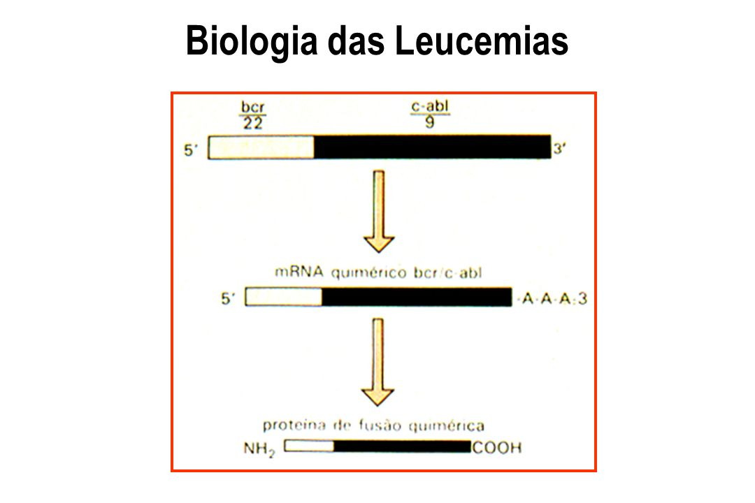 Biologia das Leucemias
