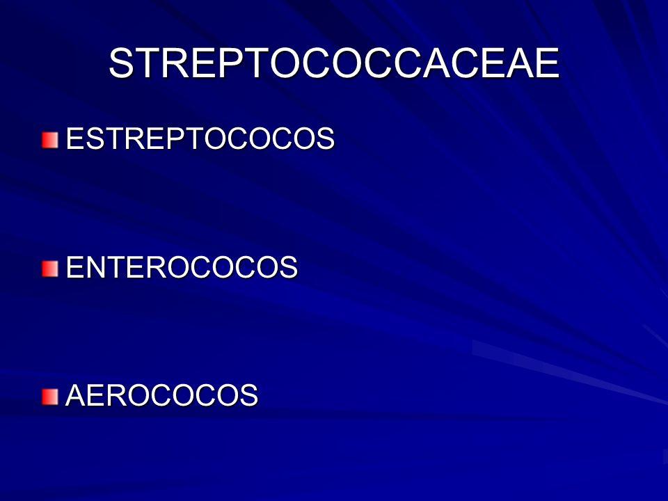 STREPTOCOCCACEAE ESTREPTOCOCOS ENTEROCOCOS AEROCOCOS