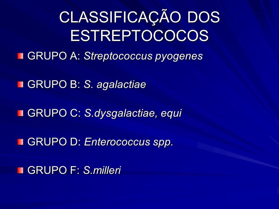 CLASSIFICAÇÃO DOS ESTREPTOCOCOS