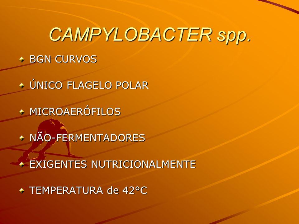 CAMPYLOBACTER spp. BGN CURVOS ÚNICO FLAGELO POLAR MICROAERÓFILOS
