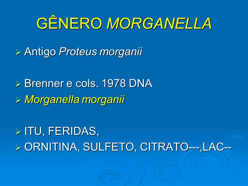 GÊNERO MORGANELLA Antigo Proteus morganii Brenner e cols. 1978 DNA