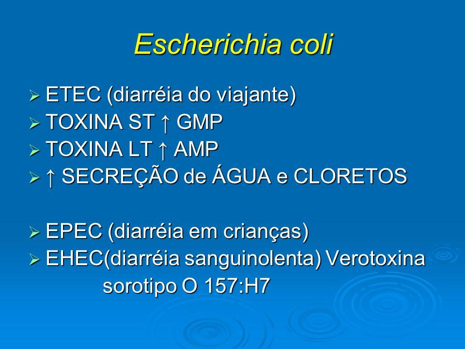 Escherichia coli ETEC (diarréia do viajante) TOXINA ST ↑ GMP