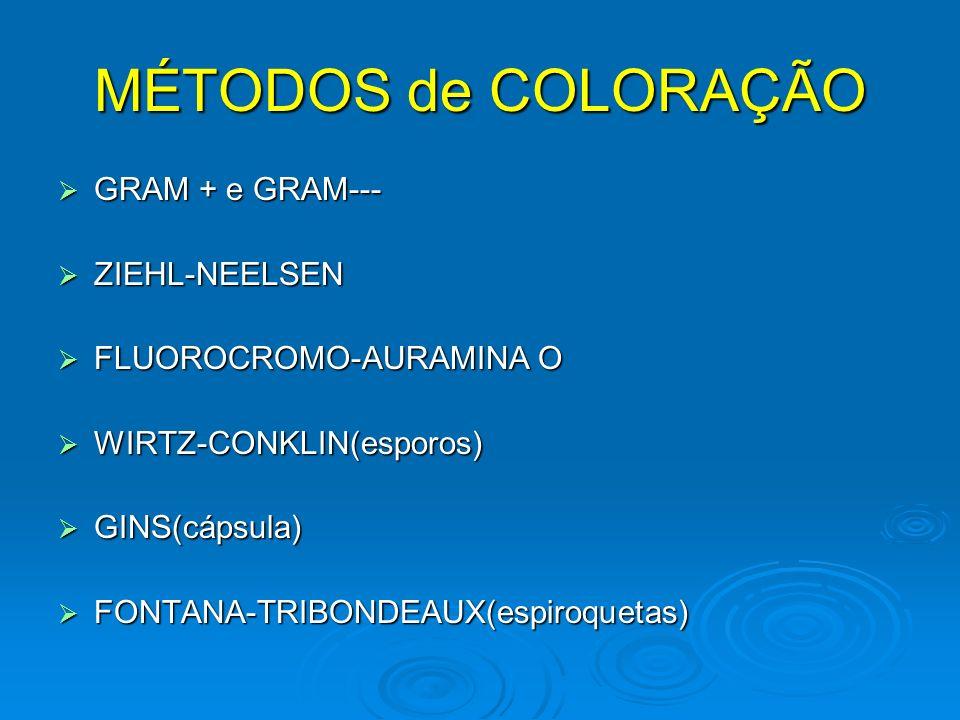 MÉTODOS de COLORAÇÃO GRAM + e GRAM--- ZIEHL-NEELSEN