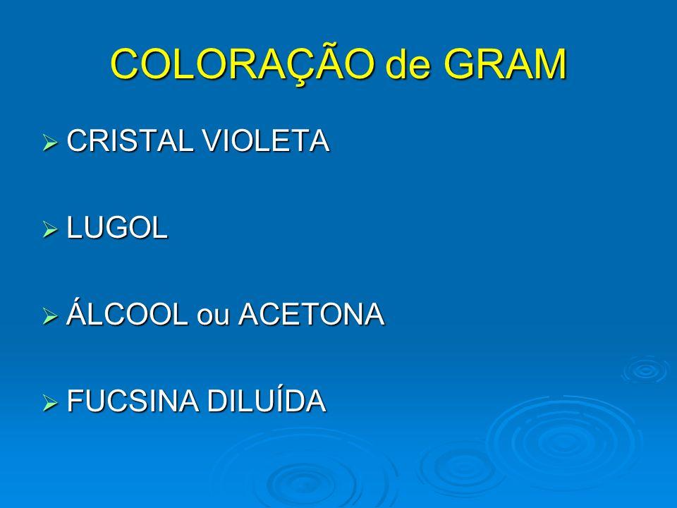 COLORAÇÃO de GRAM CRISTAL VIOLETA LUGOL ÁLCOOL ou ACETONA