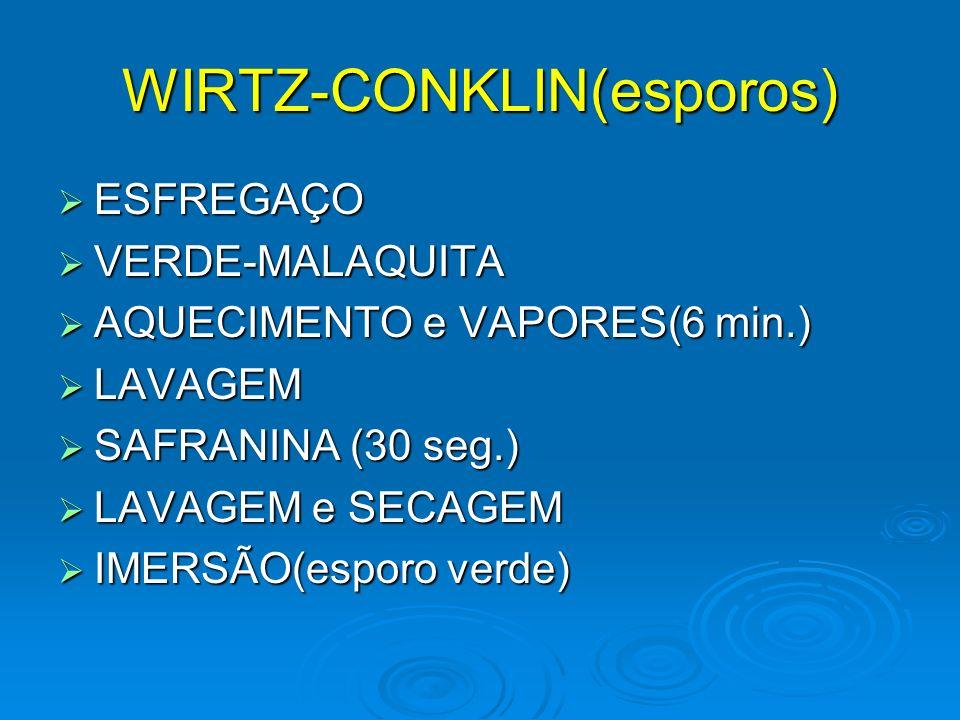 WIRTZ-CONKLIN(esporos)