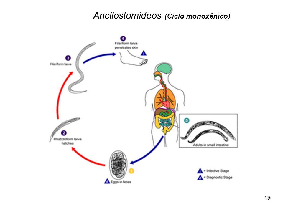 Ancilostomideos (Ciclo monoxênico)