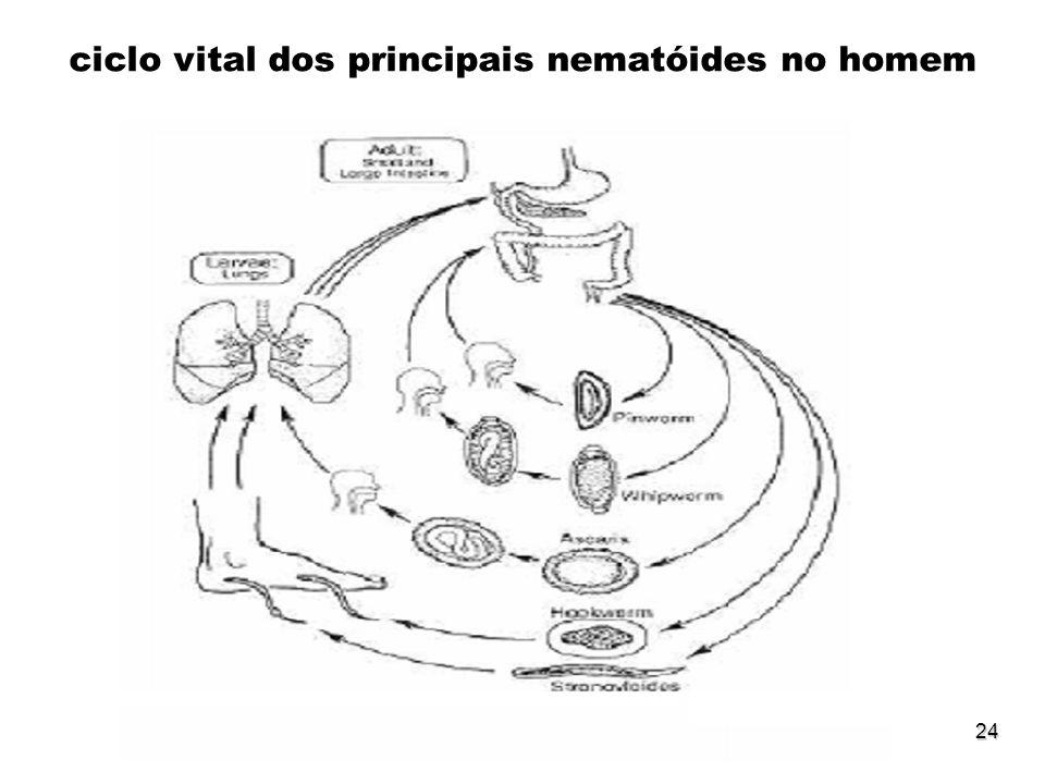 ciclo vital dos principais nematóides no homem