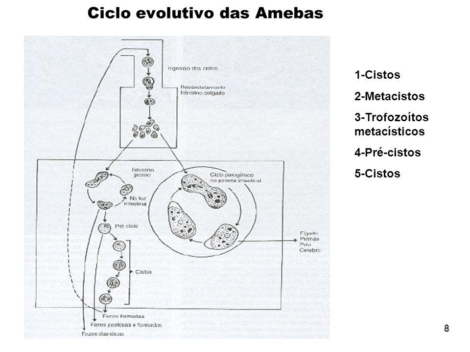 Ciclo evolutivo das Amebas