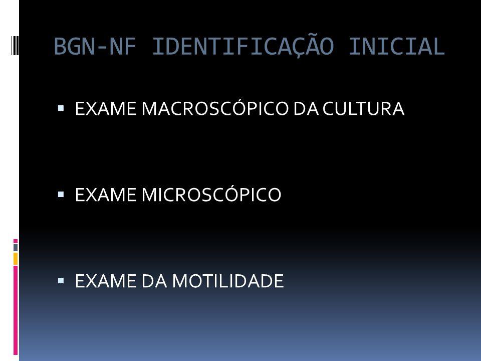 BGN-NF IDENTIFICAÇÃO INICIAL