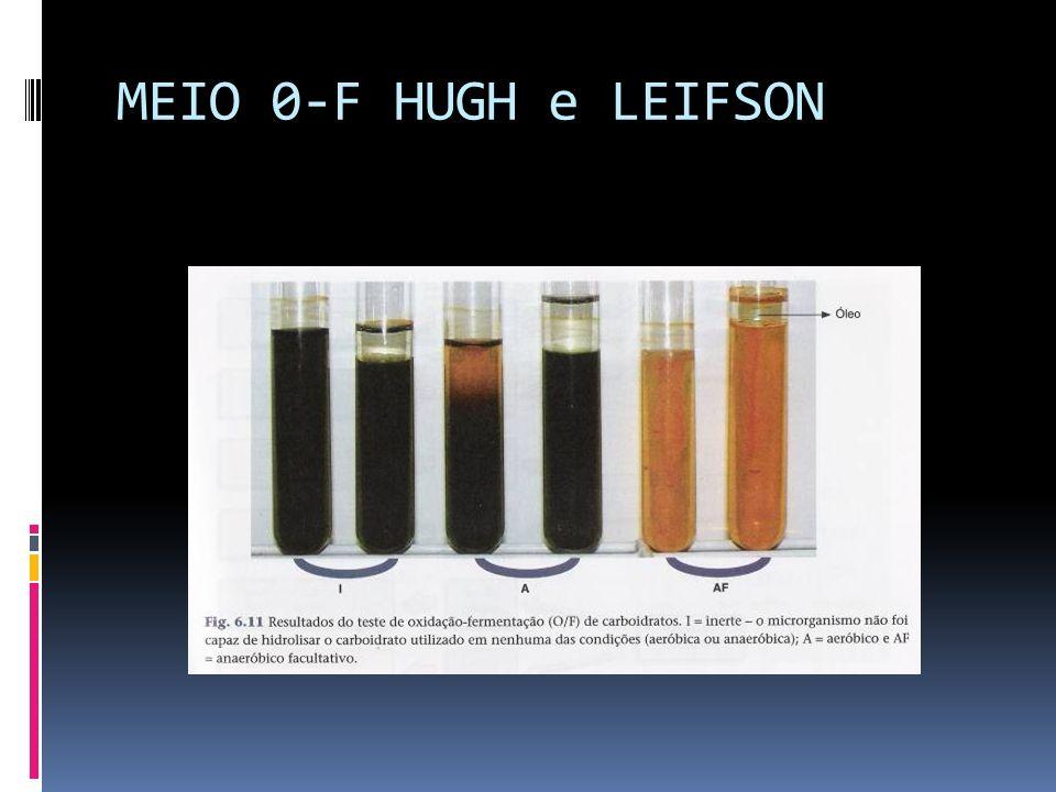 MEIO 0-F HUGH e LEIFSON