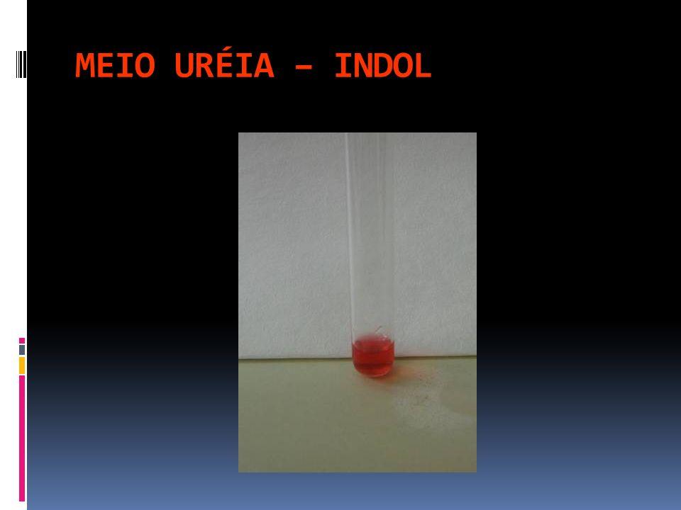 MEIO URÉIA – INDOL