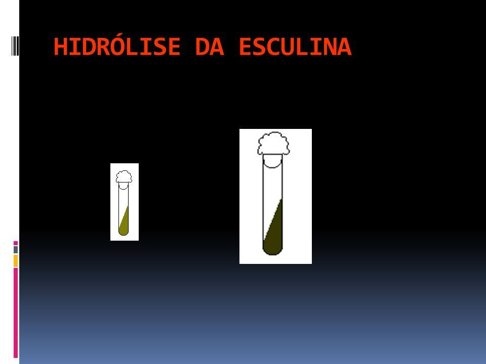 HIDRÓLISE DA ESCULINA