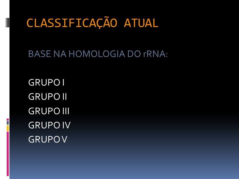 CLASSIFICAÇÃO ATUAL BASE NA HOMOLOGIA DO rRNA: GRUPO I GRUPO II
