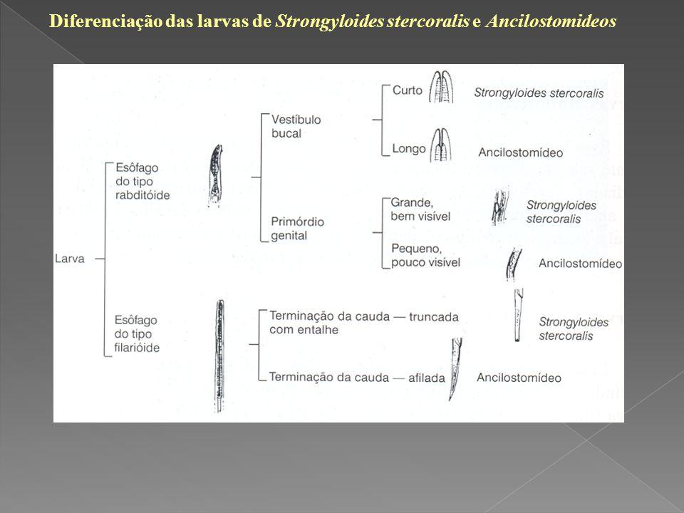 Diferenciação das larvas de Strongyloides stercoralis e Ancilostomideos
