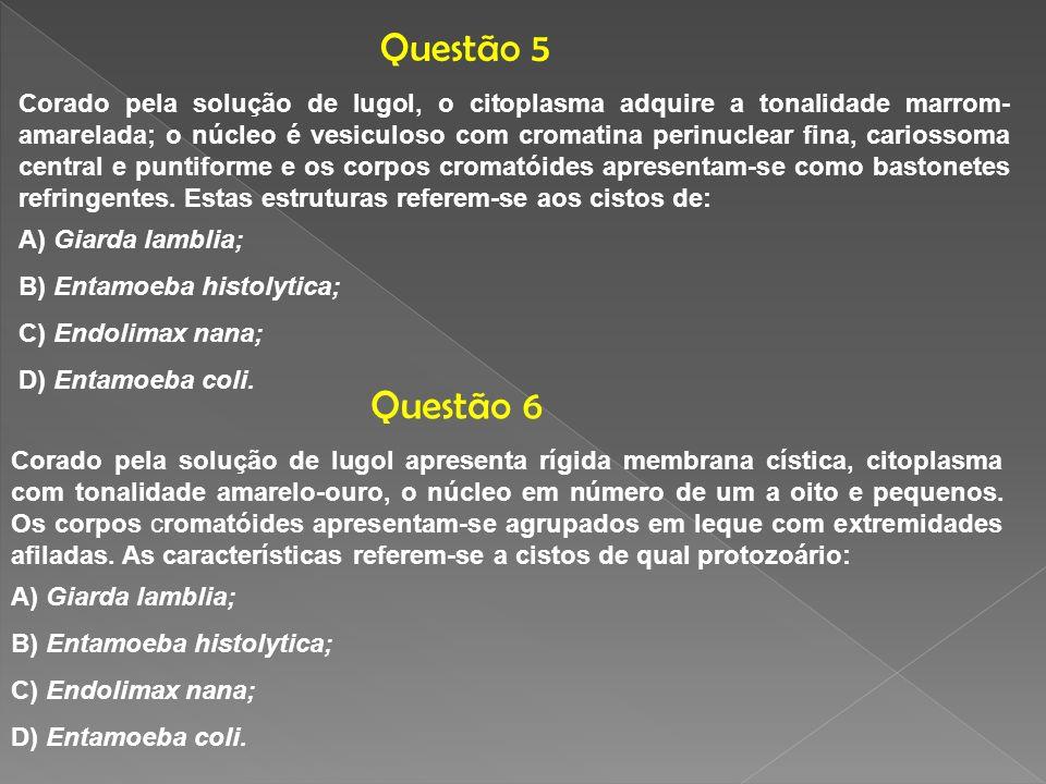 Questão 5