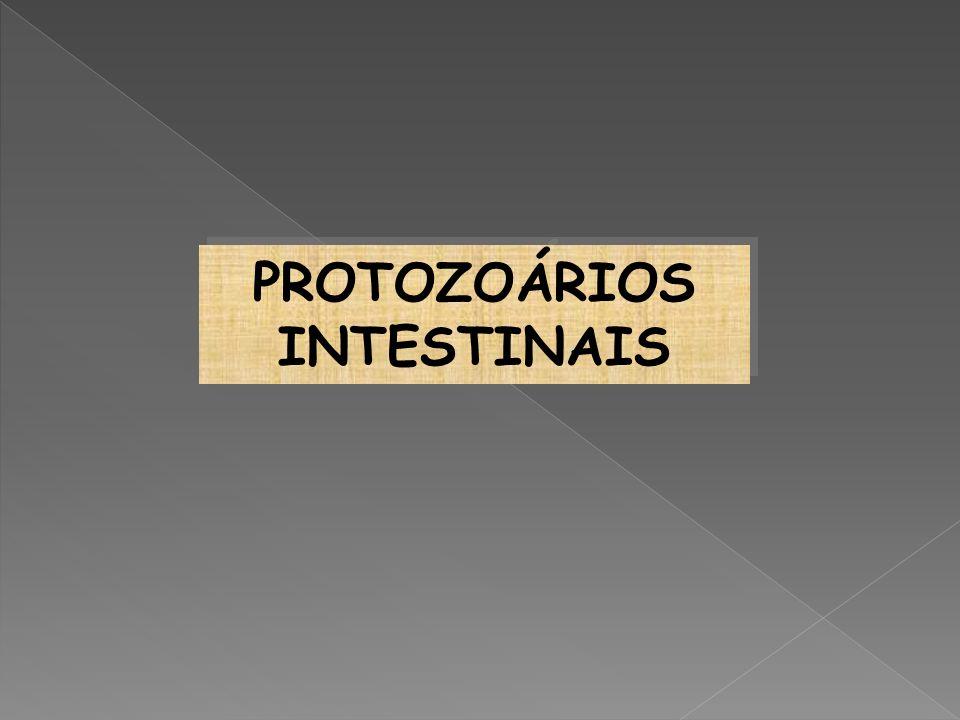 PROTOZOÁRIOS INTESTINAIS