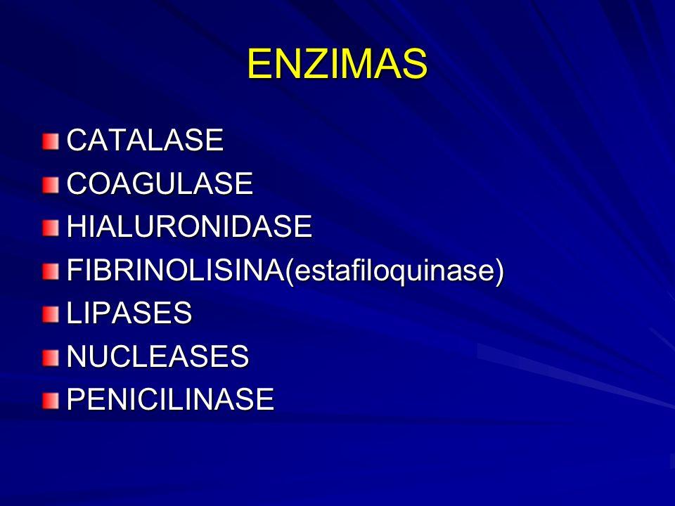 ENZIMAS CATALASE COAGULASE HIALURONIDASE
