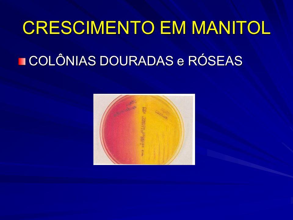 CRESCIMENTO EM MANITOL
