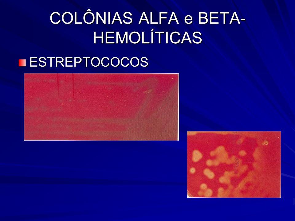 COLÔNIAS ALFA e BETA-HEMOLÍTICAS