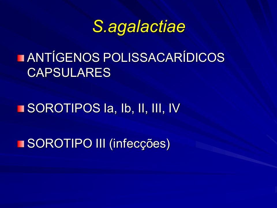 S.agalactiae ANTÍGENOS POLISSACARÍDICOS CAPSULARES