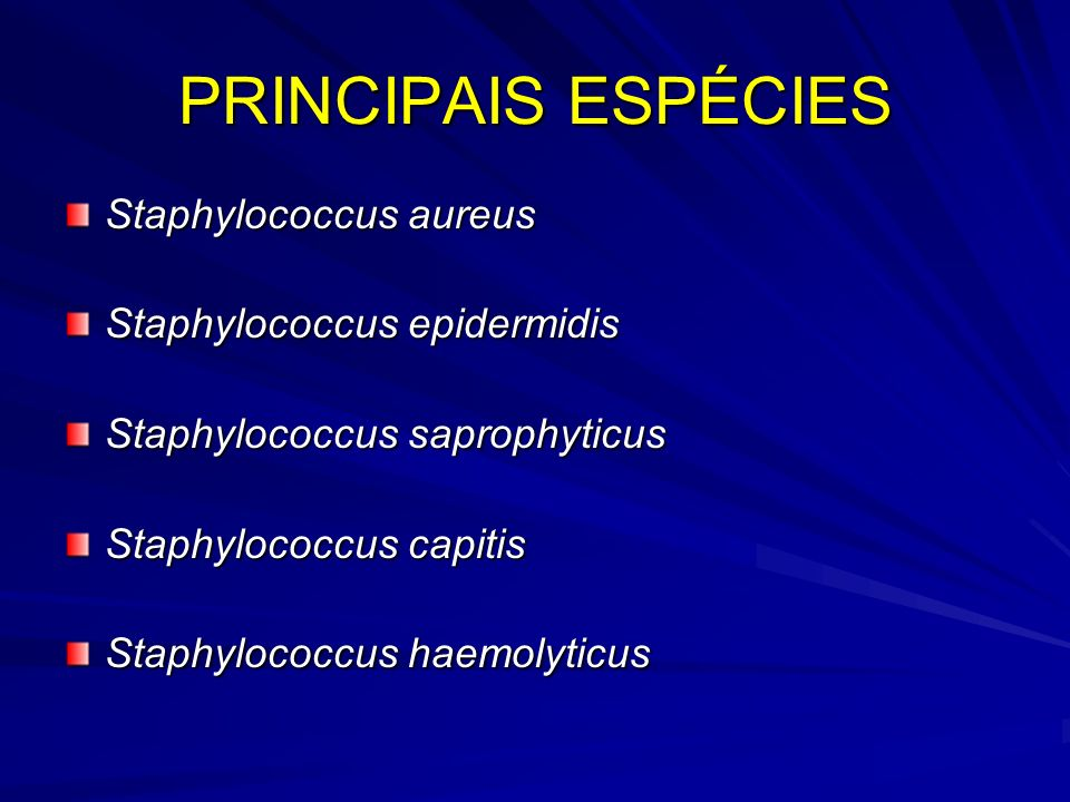 PRINCIPAIS ESPÉCIES Staphylococcus aureus Staphylococcus epidermidis