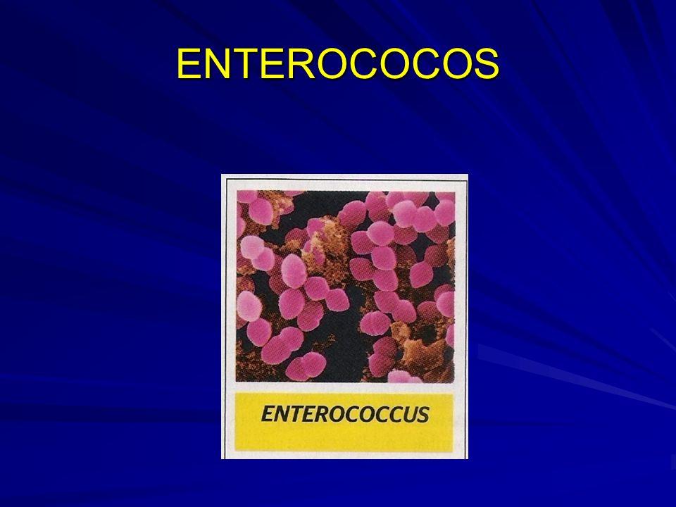 ENTEROCOCOS