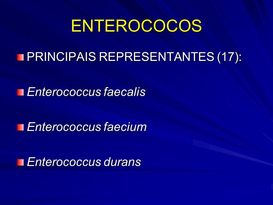 ENTEROCOCOS PRINCIPAIS REPRESENTANTES (17): Enterococcus faecalis