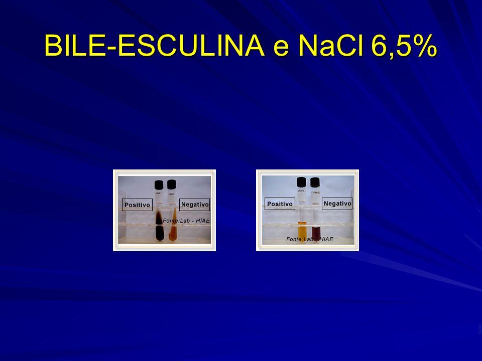 BILE-ESCULINA e NaCl 6,5%
